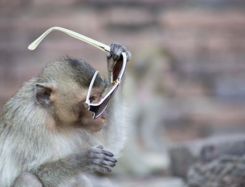 Thailand's Monkey Temple…and my favourite sunglasses